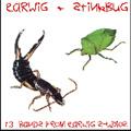 Earwig-compilation